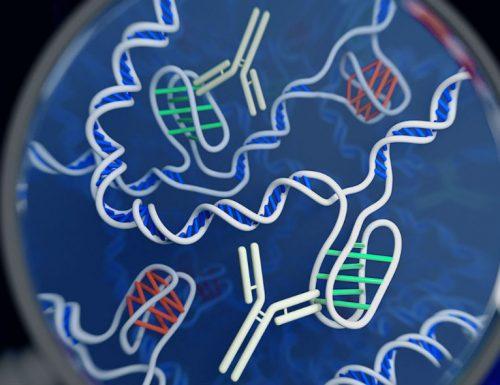 Nuclei Alogeni – Struttura