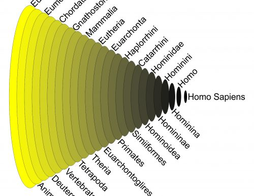 Nuclei Alogeni ed Evoluzione
