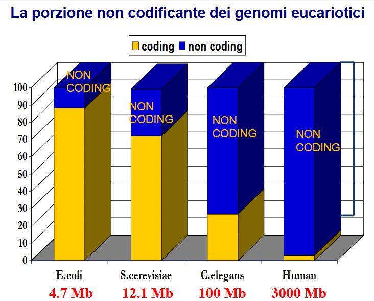 Porzione non codificanti dei genomi eucarioti